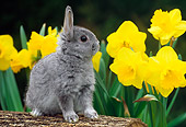 RAB 01 GR0335 01