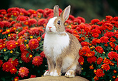 RAB 01 GR0340 01