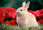 RAB 01 GR0345 01