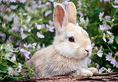 RAB 01 GR0346 01
