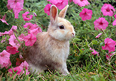 RAB 01 GR0347 01