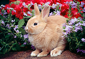 RAB 01 GR0348 01