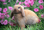 RAB 01 GR0351 01
