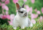 RAB 01 GR0356 01