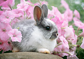 RAB 01 GR0357 01