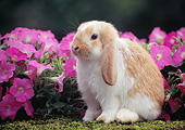 RAB 01 GR0360 01