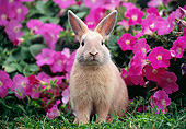 RAB 01 GR0366 01