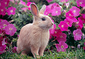 RAB 01 GR0367 01