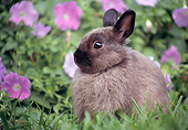 RAB 01 GR0369 01
