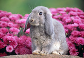 RAB 01 GR0373 01
