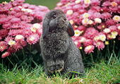 RAB 01 GR0377 01