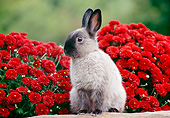 RAB 01 GR0378 01