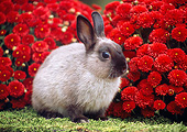 RAB 01 GR0379 01