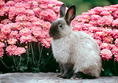 RAB 01 GR0380 01
