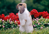 RAB 01 GR0382 01