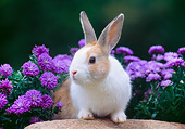 RAB 01 GR0383 01