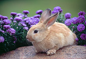 RAB 01 GR0387 01