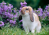 RAB 01 GR0391 01