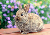 RAB 01 GR0393 01