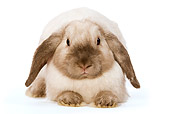 RAB 01 JE0002 01