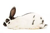 RAB 01 JE0006 01
