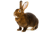 RAB 01 JE0013 01