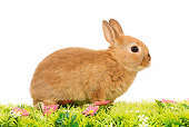 RAB 01 JE0015 01