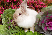 RAB 01 JE0019 01
