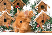 RAB 01 JE0030 01
