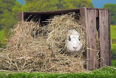 RAB 01 JE0034 01