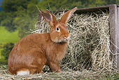 RAB 01 JE0037 01