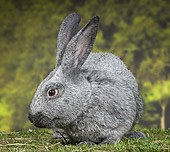RAB 01 JE0043 01