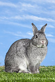 RAB 01 JE0045 01
