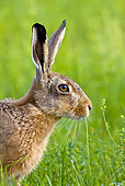 RAB 01 KH0033 01