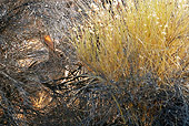 RAB 01 KH0034 01