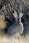 RAB 01 KH0035 01