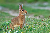 RAB 01 KH0037 01