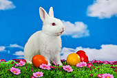 RAB 01 KH0040 01