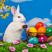RAB 01 KH0042 01