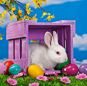 RAB 01 KH0043 01