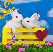 RAB 01 KH0046 01