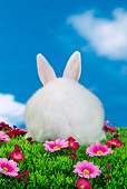 RAB 01 KH0047 01