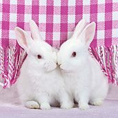 RAB 01 KH0050 01