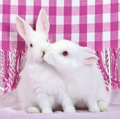 RAB 01 KH0051 01