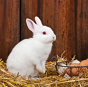 RAB 01 KH0054 01