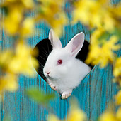 RAB 01 KH0055 01