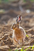 RAB 01 KH0058 01