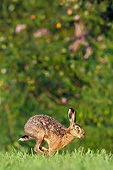 RAB 01 KH0059 01