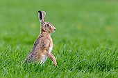 RAB 01 KH0061 01