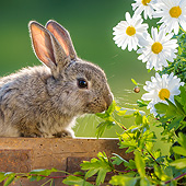 RAB 01 KH0062 01